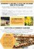 2020-Bio 63-Fiche climat apiculture.pdf - application/pdf